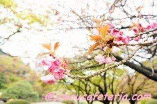今シーズン最後のお花見 新宿御苑をウロウロ 姫華ちゃん編 その1